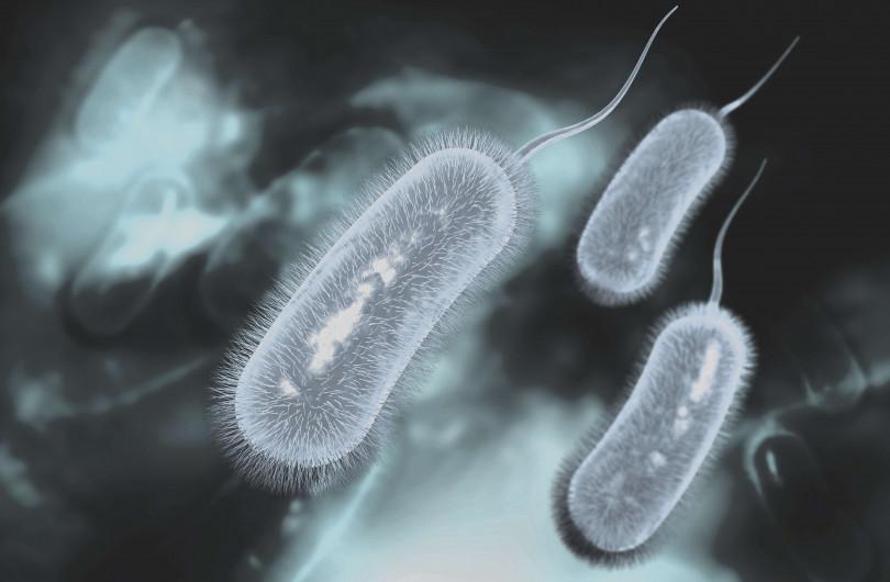 菌 ピロリ 水道 水